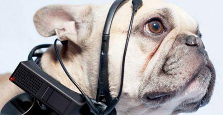 Máy phiên dịch tiếng chó sắp có mặt năm 2014